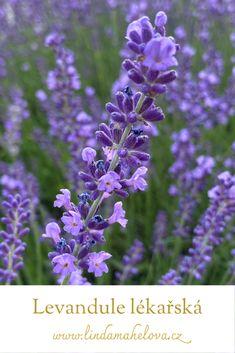 Flower Gardening, Beautiful Gardens, Garden Design, Home And Garden, Flowers, Plants, Landscape Designs, Plant, Royal Icing Flowers