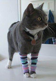 Kitten leg warmers!