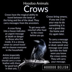 Crow Magick and Hoodoo Crow Magick and Hoodoo,Animals & Creatures Crow Magick and Hoodoo Information Related posts:- Mcr memesMCR and NME Awards 2011 funny by alamniezmusilaxd on DeviantArt - Mcr memesAll things truly wicked. Witch Spell Book, Witchcraft Spell Books, Hoodoo Spells, Magick Spells, Wicca Witchcraft, Animal Spirit Guides, Crow Spirit Animal, Voodoo Hoodoo, Witchcraft For Beginners