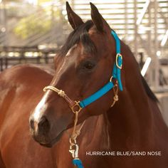 Patent Pending HYBRIDHalter improves the leverage you have on your horse for additional control and is safer and more convenient than a rope halter.