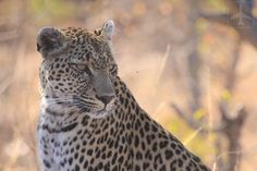 South Africa Safari: Private Game Reserve or Kruger? Kruger National Park, National Parks, Safari Game, South Africa Safari, Private Games, Big 5, Game Reserve, Bird Species, Pet Birds