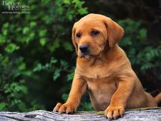 Puppies images Cute Puppy HD wallpaper and background photos (13986328 ...