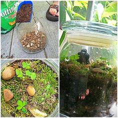 Make a Rainforest in a Jar