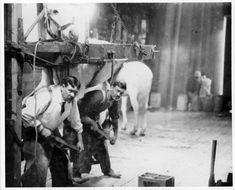 Men working in the interior of a blacksmith shop. Vancouver Washington, Clark County, Blacksmith Shop, Blacksmithing, Historical Photos, Old Photos, Photograph, Museum, Horses