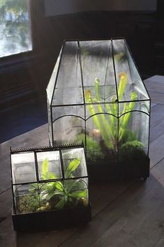 Carnivorous PlantsGreenHaven: Carnivorous Plants A natural looking fish bowl idea Large Greenhouse Moss Terrarium with Landscape Scene in Indoor Garden, Garden Plants, Indoor Plants, Garden Beds, Garden Gates, Plant Watering System, Room Deco, Greenhouse Growing, Greenhouse Ideas
