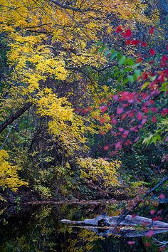 Trees turn a variety of fall colors along Big Chico Creek in Lower Bidwell Park, Chico.