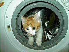 How'd I get in here? #toocute #cat #kitten
