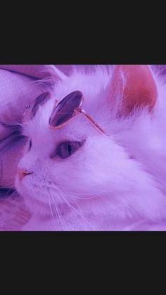 fotos de gatoss