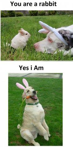Bunnified Dog!!!