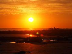 Speckled Sunset