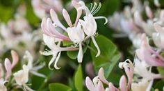 5 plantes hyper résistantes à avoir dans son jardin