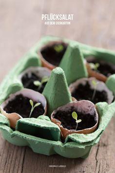 Pflücksalat im Eierkarton selbst ziehen - Eine süße Idee von dem Blog dreierlei liebelei