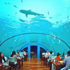 Under water restaurant in Maldives.#richlifeofmaldives #maldives #maldivesislands by maldives.paradise