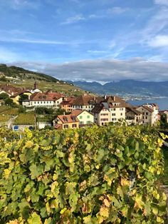 The Lavaux UNESCO World Heritage Vineyards in Vaud. A walk thrugh one of the most scenic areas of Switzerland with the terraced vineyards. Places To Travel, Places To Visit, Walking Routes, Going On Holiday, World Heritage Sites, See Photo, Switzerland, Festivals, Vineyard