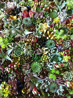 I really want to do this for my screened in porch.  I especially love the succulents. Living Wall at Red Butte Garden | Flickr - Photo Sharing!