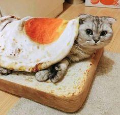 Potholders Idea: Fried egg w/ a slice of toast