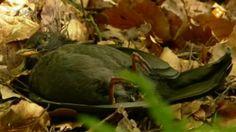 Koekeloere: dag vogeltje.