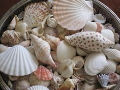 Pearls in Paradise: Decorating with Sea Shells