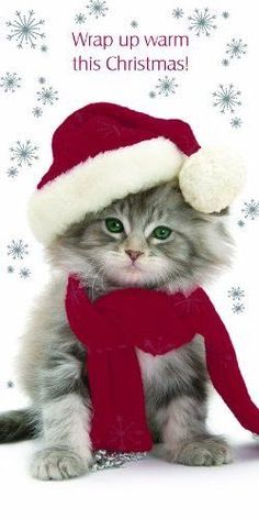 A wide range of adorable kitten themed Christmas cards for cat lovers can be found displayed on this page below. For cat lovers or I Love Cats, Crazy Cats, Cute Cats, Funny Cats, Christmas Kitten, Christmas Animals, Merry Christmas, Good Morning Christmas, Xmas