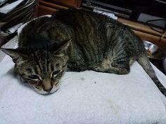 今日の猫(2014/11/25) | Flickr - Photo Sharing!