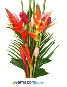 Tropical Flowers, Wholesale Tropical Flowers, Wholesale Heliconia, Exotic Flowers, Fresh Tropical Flowers | Amazonflowers.us