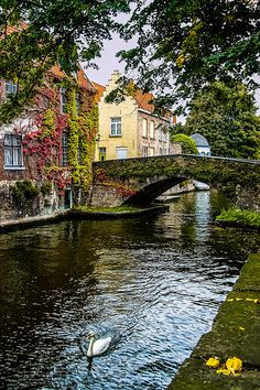 been there, one of the most romantic places I ever been. /Lone Swan, Bruges, Belgium/