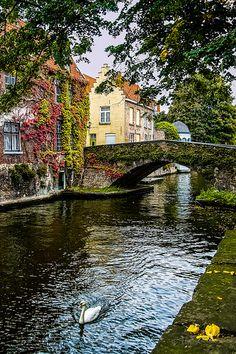 Lone Swan, Bruges, Belgium