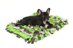 Meadow Rug is your pet's new favorite hangout spot and a fun accent piece to any surrounding environment