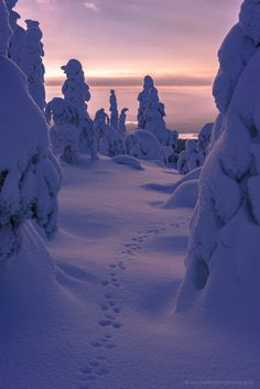 Trails in the Snow