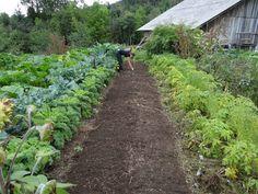 これが知りたかった!基本の土作りを徹底解説!|農業・ガーデニング・園芸・家庭菜園マガジン[AGRI PICK]