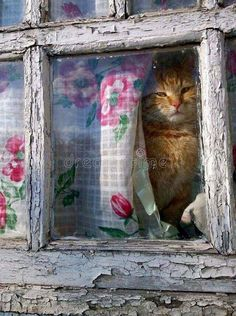 Top 25 Cute Kittens and Funny Cats Crazy Cat Lady, Crazy Cats, I Love Cats, Cool Cats, Animals And Pets, Cute Animals, Cat Window, Gatos Cats, Kitten Care