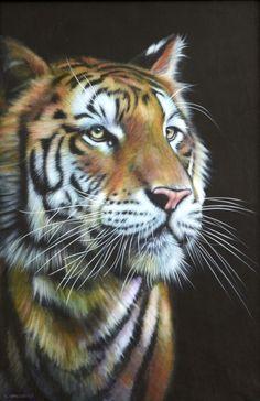 Tiger YANG by Karl Hamilton-Cox