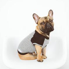 French Bulldog CUTE! | City Dog Living
