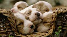 Sette cucciolini annegati a Chieri: per loro nulla da fare. Enpa cerca i responsabili :http://www.qualazampa.news/2017/01/19/sette-cucciolini-annegati-a-chieri-per-loro-nulla-da-fare-enpa-cerca-i-responsabili/