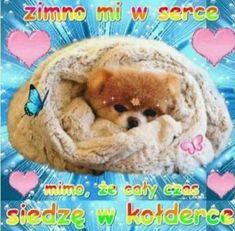 Heart Meme, Wholesome Memes, Reaction Pictures, Weird, Teddy Bear, Feelings, Wattpad, Funny, Humor