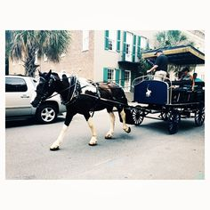Love the old Southern charm of Charleston!