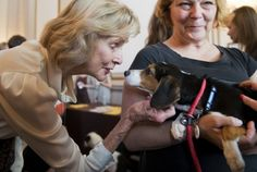 Rep. Lois Capps greets Marley, a beagle mix, and handler Kelly Andrews of the Prince George's County Animal Shelter during an American Society for the Prevention of Cruelty to Animals and Congressional Animal Protection Caucus event in the Cannon Building. (Tom Williams/CQ Roll Call)