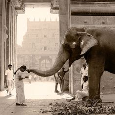 Elephant Blessings - can't think of anything better