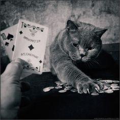 Humanizar os felinos foi a proposta do russo Andy Prokh