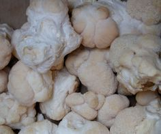 Lions mane is top among the medicinal mushrooms for its enhancement of brain and cognitive function.  Learn more about this edible mushroom variety that has proven effective with neurodengenerative...