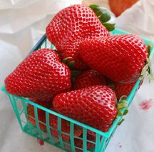 salivating... those look perfect! love strawberries!