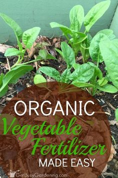 Outstanding Grow Like A Pro With These Organic Gardening Tips Ideas. All Time Best Grow Like A Pro With These Organic Gardening Tips Ideas. Container Gardening Vegetables, Planting Vegetables, Organic Vegetables, Growing Vegetables, Vegetable Gardening, Veggies, Flower Gardening, Organic Gardening Tips, Organic Fertilizer