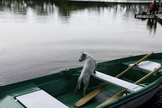 Bulterier na łódce