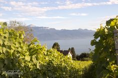 25 km of vineyards, Lausanne