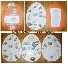 Development of chick in egg LapBook. Art Education Projects, Science Projects, Physical Adaptations, Animal Classification, Bird Gif, My Father's World, Spring Theme, Forest School, Nature Journal