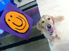 Jake, our official office pet! #dog #pet
