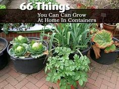 66 things you can grow at home in containers! http://plantcaretoday.com/66-things-you-can-can-grow-at-home-in-containers.html