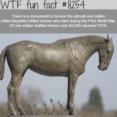 WTF Fun Facts is updated daily with interesting & funny random facts. We post about health, celebs/people, places, animals, history information and much more. New facts all day - every day! The More You Know, Good To Know, Did You Know, Wtf Fun Facts, Random Facts, Funny Weird Facts, Random Things, Interesting History, Interesting Facts
