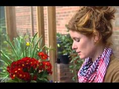 Alys Fowler: Growing beans and peas on an allotment - YouTube