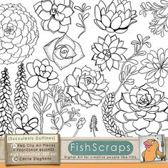 Succulent Clip Art and Photoshop Brushes - Hens and Chicks Outlines - Doodles